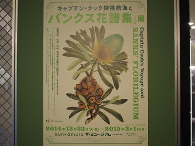 バンクス花譜集展.JPG