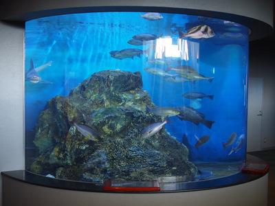 かごしま水族館33.JPG