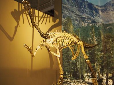 アラシャサウルス.JPG