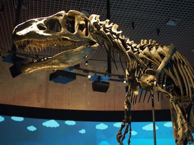 アロサウルス2.JPG
