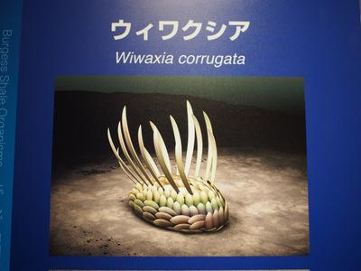 ウィワクシア想像図.JPG