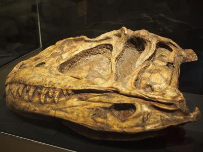 カマラサウルス.JPG
