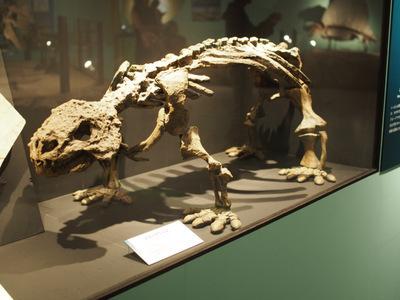 スクトサウルス.JPG