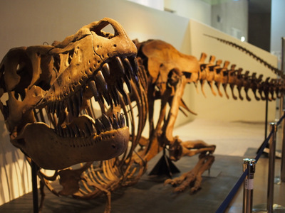 タルボサウルス.JPG