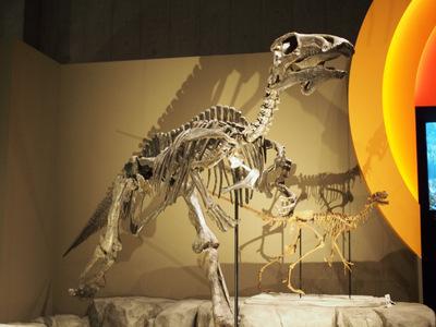 バクトロサウルス.JPG