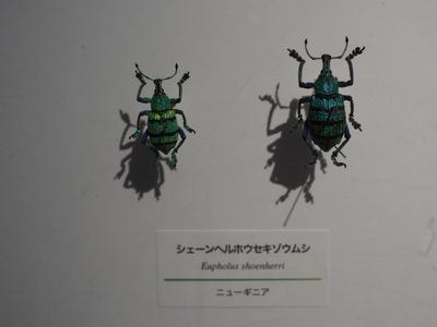 ホウセキゾウムシ.JPG