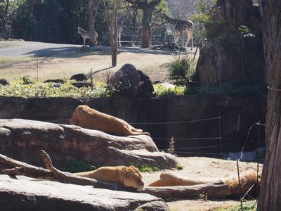 天王寺動物園7.JPG