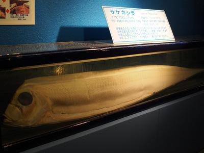 志摩マリンランド43.JPG