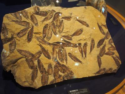 魚群化石.JPG