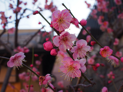 春の訪れ.JPG