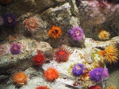 海の花.JPG