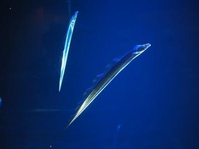 深海の刀剣.JPG