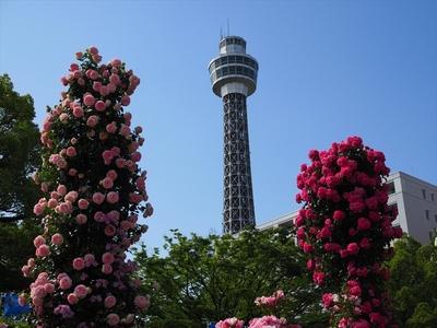 薔薇とタワー.JPG