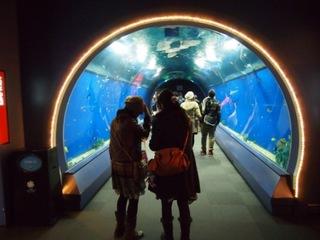 海遊館入口.JPG