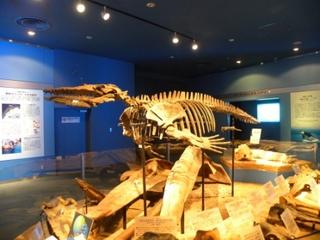 鯨の化石.JPG