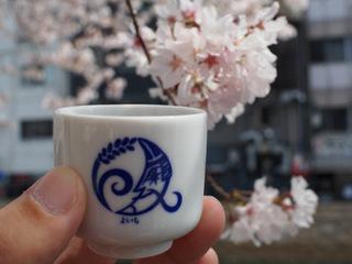 桜に乾杯.JPG