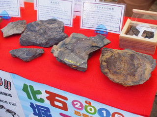 福井の化石.JPG