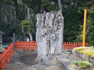 鶴岡八幡宮4.JPG